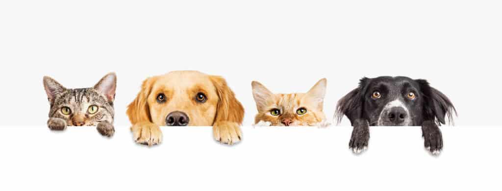 Reico – Reico Vital – Reico Vital Systeme - Reico Futter – Reico Trockenfutter – Reico Hundefutter - Reico Katzenfutter- Nassfutter Hunde - Trockenfutter Hund - Bio Hundefutter – Reico Welpenfutter – Welpenfutter - Nassfutter Katzen – Reico Olymp – Vitamine für Hunde