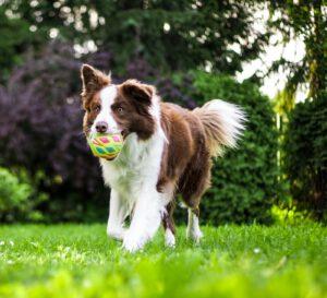 Reico Vital - Reico Vital Systeme - Reico Futter - Reico Hundefutter -Reico Tiernahrung - Reico Online Shop - Reico Hundefutter Shop - Premium Hundefutter - Reico Nassfutter - Hundefutter Premium - Hundefutter ohne Getreide - Bio Hundefutter - mineralisches Gleichgewicht - Reico Futterprobe - Welpenfutter - Hunde Ernährung – Hundeernährung – Hundenahrung - getreidefreies Hundefutter Test - getreidefreies trockenfutter hund test - bestes Hundetrockenfutter