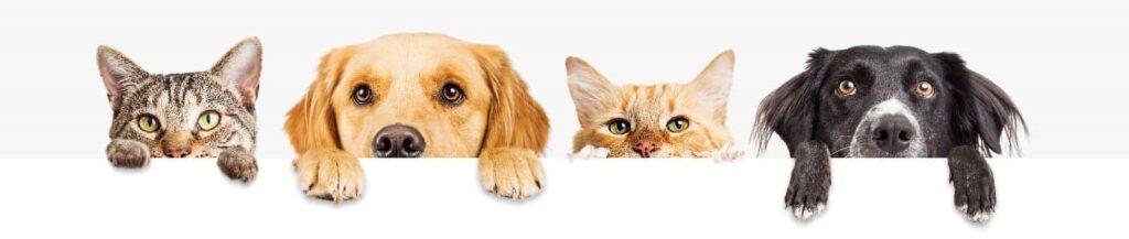 Reico Hundefutter - Reico Katzenfutter - Maxidogvit - Reico Tierfutter - Reico Vital - Reico Vital Systeme