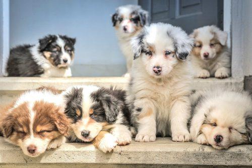Reico Welpenfutter - Hundefutter - Welpenfutter - Hunde Ernährung – Hundeernährung – Hundenahrung – Katzenfutter – Futter Welpen – Welpenfutter Test – Welpen Nassfutter – bestes Welpenfutter – Futtermenge Welpen – Welpen Trockenfutter – Nassfutter Welpen – Hundefutter Welpen – Welpen Füttern Menge – Welpen Futtermenge – Welpen Ernährung – Trockenfutter Welpen – welches Futter für Welpen – Welpenfutter ohne getreide